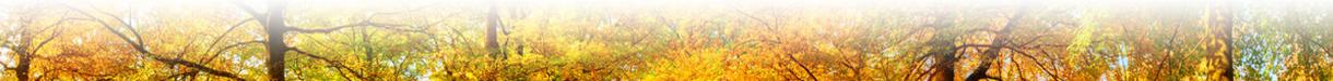 fall-leaves-top-bar.png